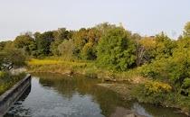 Mabel Davis Conservation Area